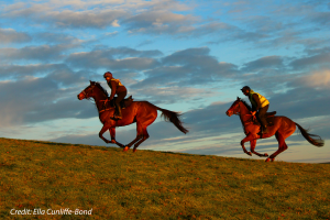 Horse Riding in Thorverton