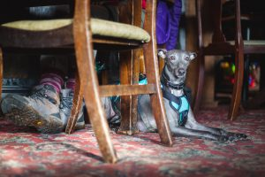 A dog sitting under a pub table
